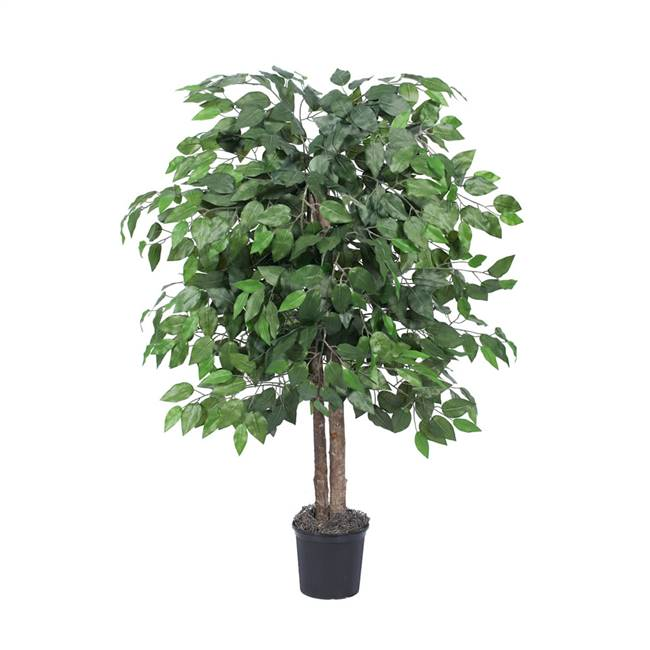 4' IFR Ficus Bush in Blk Pot