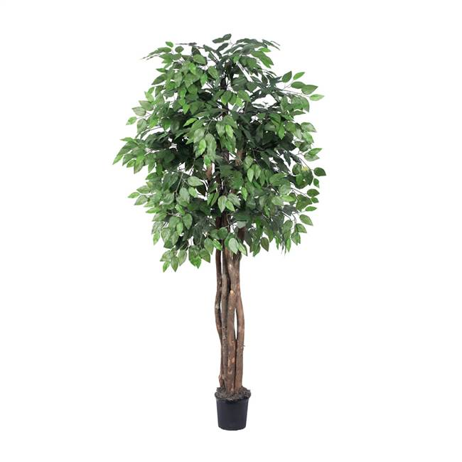 6' IFR Ficus Executive Tree