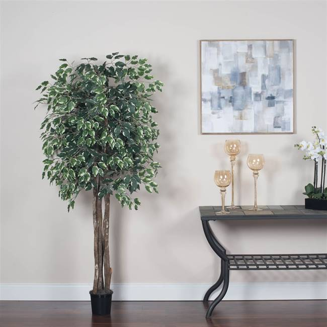 6' IFR Varigated Ficus Executive Tree