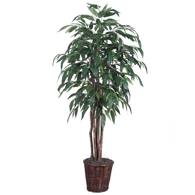 6' IFR Green Mango Executive Tree