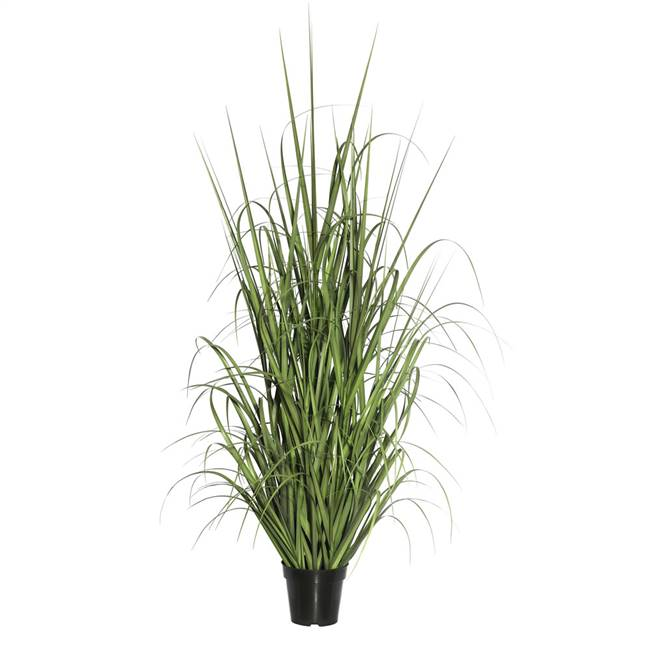 "36"" Green Ryegrass in Pot"