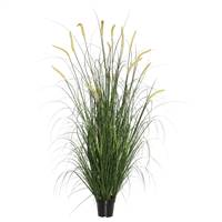"36"" Green Foxtail Grass in Pot"