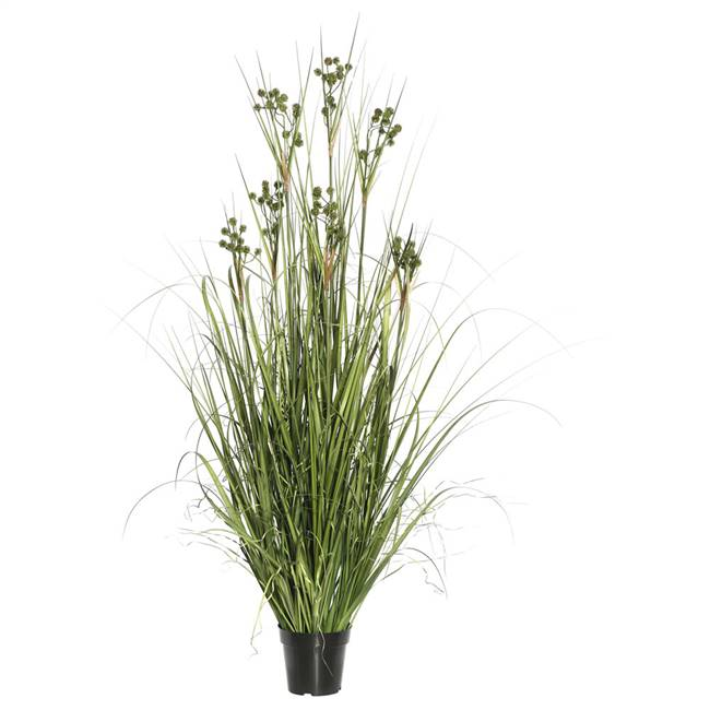 "48"" Grass with Pomp Balls in Pot"