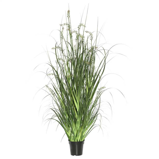 "48"" Green Sheep's Grass in Pot"