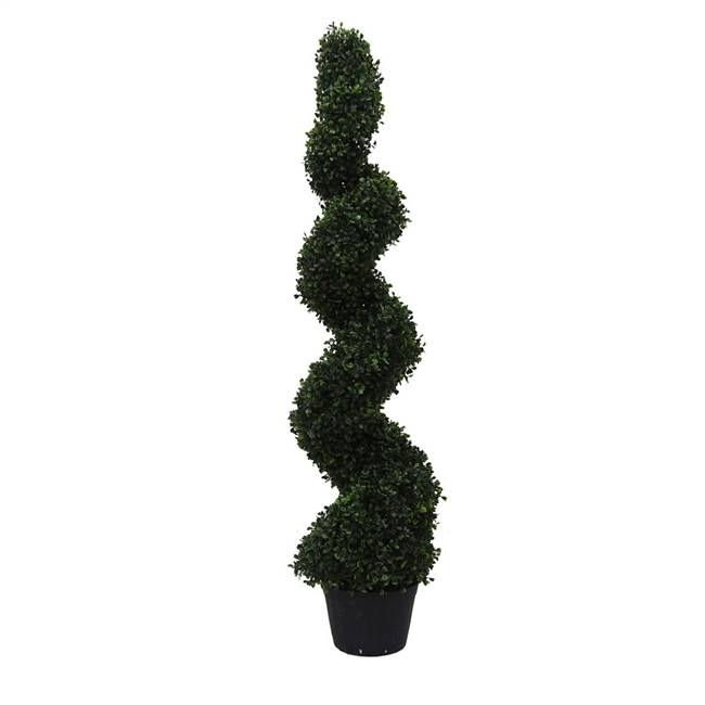 4' Boxwood Spiral In Pot (UV)