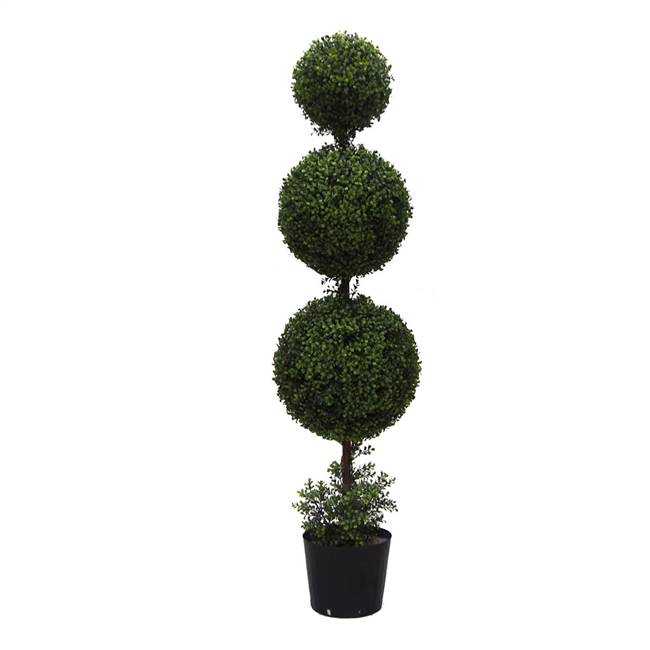5' IFR Boxwood Triple Ball In Pot