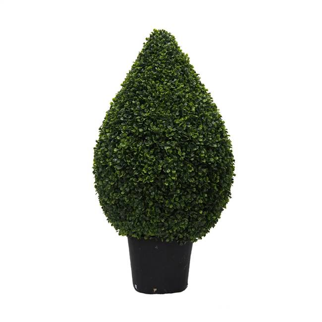 "36"" Boxwood Teardrop Shaped In Pot (UV)"