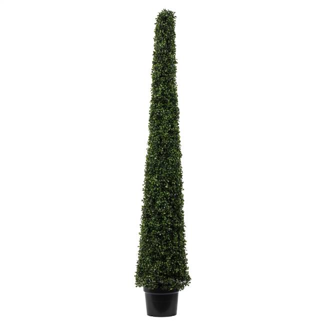 6' Potted Boxwood Cone UV