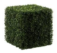 "20"" Boxwood Cube UV"