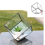 "Geometric Glass Terrarium, Heptahedron, Tilted Cube, Black Frame - Width: 8.5"", Height: 8.5"" (6"" Square cube tilted)"