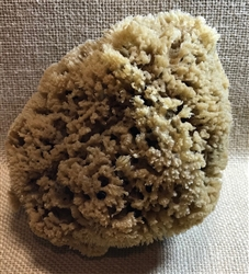 Natural Sea Sponge Large