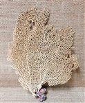 Sea Fan crabitat decor