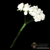 Flowers: DiD White Flower Bouquet