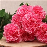 Carnation Bunch 8 Flowers Pink