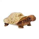 Speedy the Plush Tortoise by Douglas