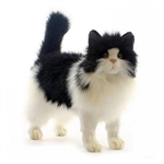 Lifelike Black and White Cat Stuffed Animal by Hansa
