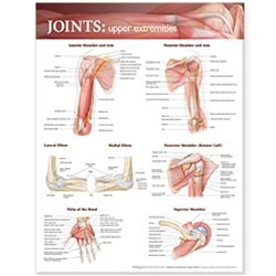 Joints of the Upper Extremities Anatomical Chart