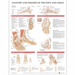 Anatomy and Injuries of the Foot and Ankle Chart