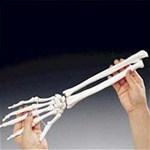 Rigid Skeletal Hand Model