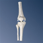 Mini Knee Joint