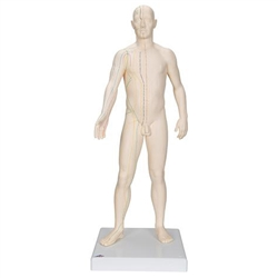 Acupuncture Model (Male)