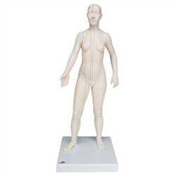 Acupuncture Model (Female)