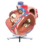 3B Scientific Giant Human Heart Model, 8 Times Life-Size Smart Anatomy