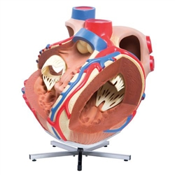 Giant Heart (8 Times Life Size)