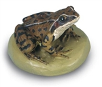 Common Frog Model (Male)