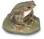 Common Toad Model (Male)