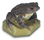 Common Toad Model (Female)
