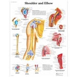 Shoulder and Elbow Chart