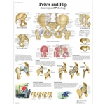 3B Scientific Pelvis and Hip Chart, Anatomy and Pathology