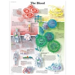 3B Scientific The Blood Chart