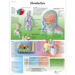 3B Scientific Headaches Chart