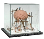 Brain in Showcase