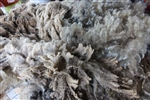 Raw Fleece- Coopworth - Ornot