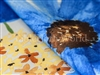 Jumbo Blossoms Print Pattern Tablecloths