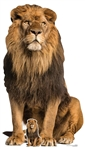 Star Cutouts SC1438 Adult Male Lion King of the  Jungle  Sitting Perfect for Animal Fans, Parties, Collectors, The Stage and Events Height 155cm