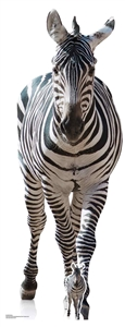 SC1439 Adult Zebra Black and White Perfect for Animal Lovers, African Theme Parties and Events Height 162cm