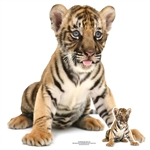 SC1440 Bengal Tiger Cub Sitting Star Mini Cardboard Cutouts Perfect for Animal Lovers, Indian Theme Parties and Events Height 162cm