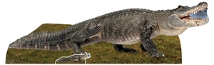 SC1457 Fresh Water American Alligator Animal  Cardboard Cutout Display Perfect for Wildlife, Nature Parties and Safari Theme Events Height 58cm