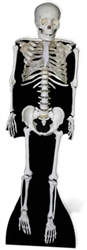 Skeleton Lifesize Cardboard Cutout