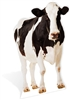 Star Cutouts SC163 Lifesize Cardboard Cutout of Cow Farm Animal