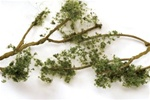 "Bachmann 32644 SceneScapes Wire Foliage Branches Medium Green 1 to 3"" Long pkg 60"