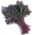 Kale, Red Russian ~ 1 bunch