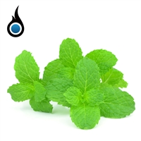 Exhilarating Spearmint eJuice - 10mL e-Liquid Bottle