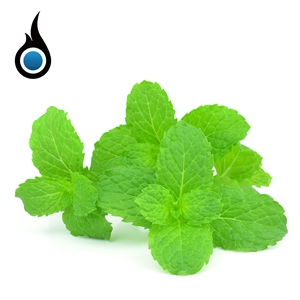 Exhilarating Spearmint Flavor eJuice - 10mL High PG e-Liquid Bottle | Vapor Lounge®