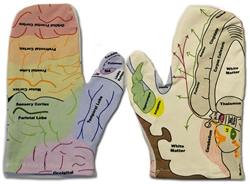 The Handy Brain Model