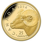 25c 2014 Pure Gold Coin - Rocky Mountain Bighorn Sheep
